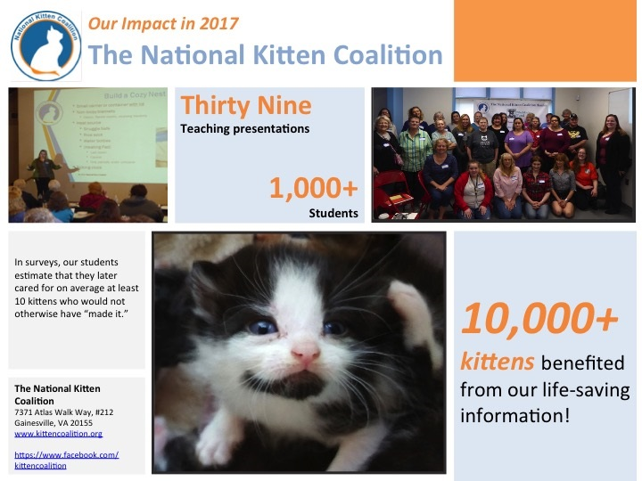 In 2017, 10,000+ kittens benefited from our life-saving trainings!