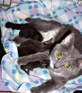 Mom Cat Nursing Kittens