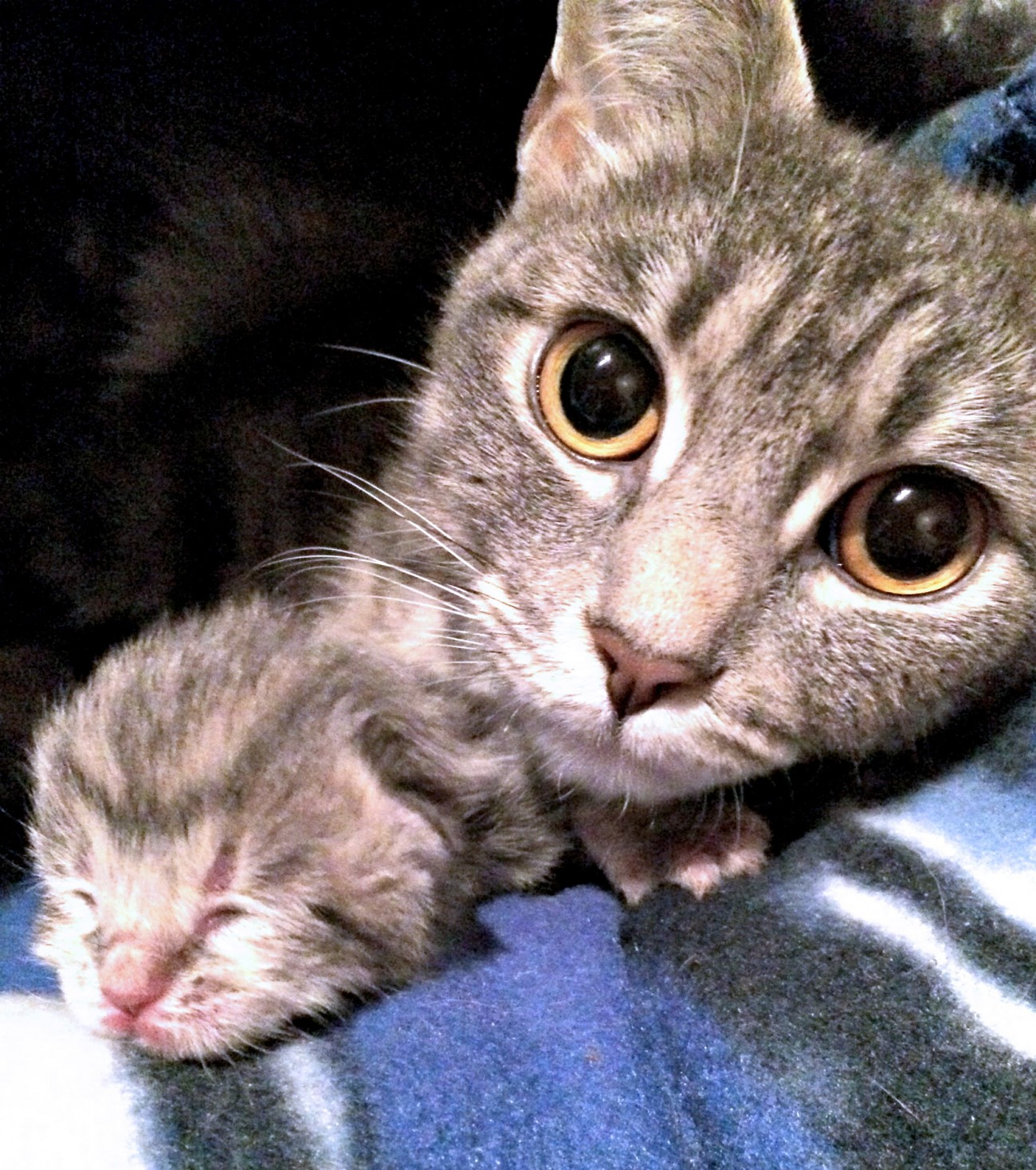 Mother cat and kitten photo