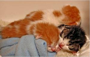 Litter of Kittens Sleeping