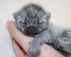 Kitten critical care photo