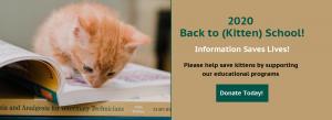 2020 Back to Kitten School