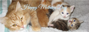 Mother's Day 2021 Fundraising Slide